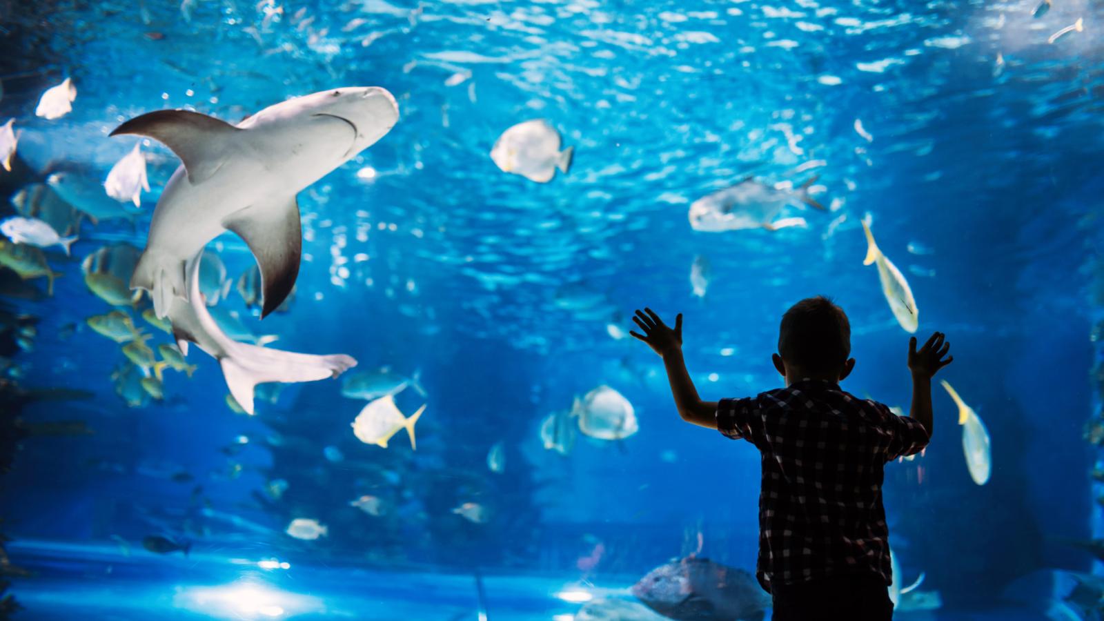boy leaning on glass of aquarium